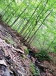 The Bull Run/Occoquan Trail